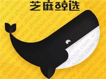 芝麻鲸选发展趋势如何?新手该怎么做